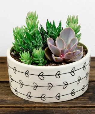 20 Cute DIY Tiny Plants Ideas 19