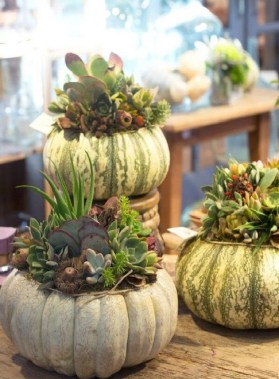 22 Beautiful And Incredible Fall Succulent Ideas 16