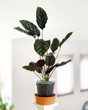 23 Beautiful Pots And Planters To Beautify Your Small Spaces 09