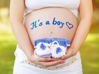 حامل بولد