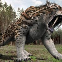 Saber Tooth Tiger Facts For Kids - Best for School Research Projects