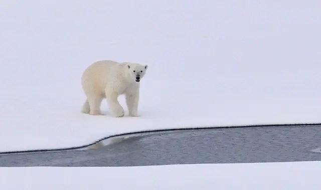 polar bear habitat