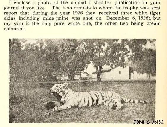 WHite tiger history