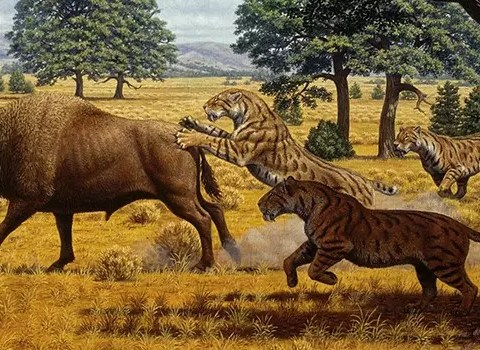 saber tooth tiger diet