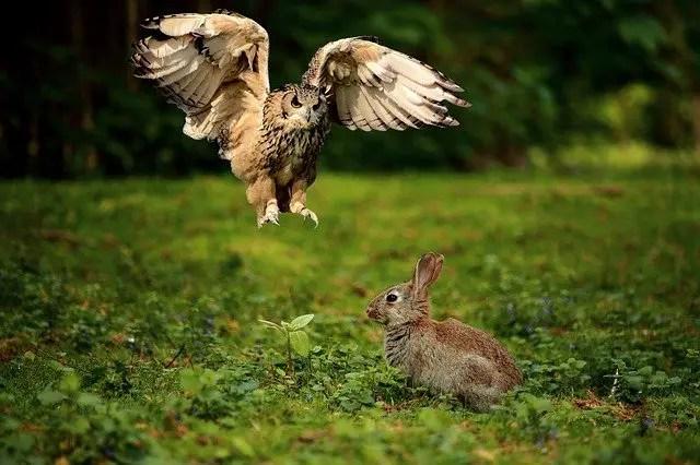 What Do Owls Eat Owls Diet Kidz Feed