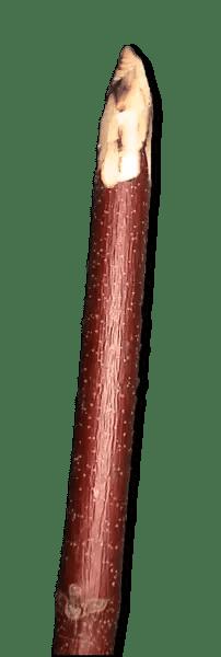 Sharpened Sticks - stone age tools