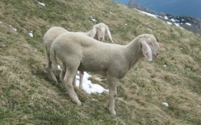 It really doesn't matter (parable of the good shepherd) assembly idea