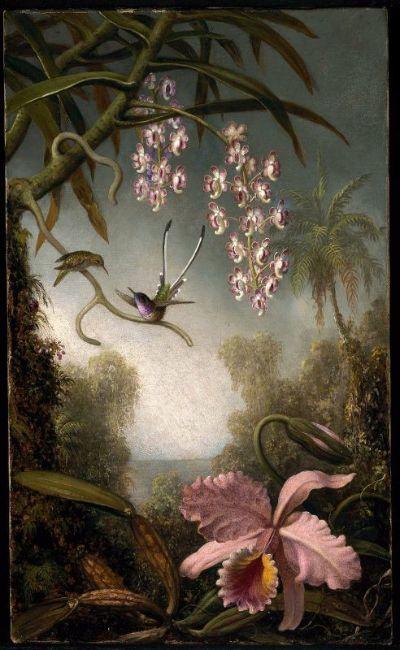 M.J.Heade Orchids
