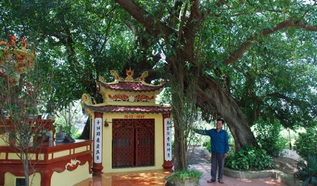 Chỗ bóng cây duy nhất ở làng