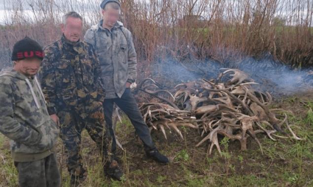 З Чорнобильської зони намагалися вивезти 60 кг лосиних рогів