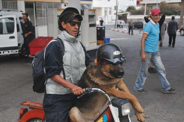 غرائب.. عندما يحترم الكلب قانون السير