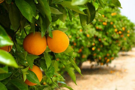 ابتداء من أكتوبر المقبل.. المغرب يستأنف تصدير الحوامض نحو أمريكا