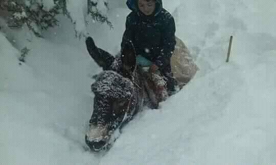 طفل على بغلة محاصر بالثلوج.. صورة قاسية من آيت بوكماز