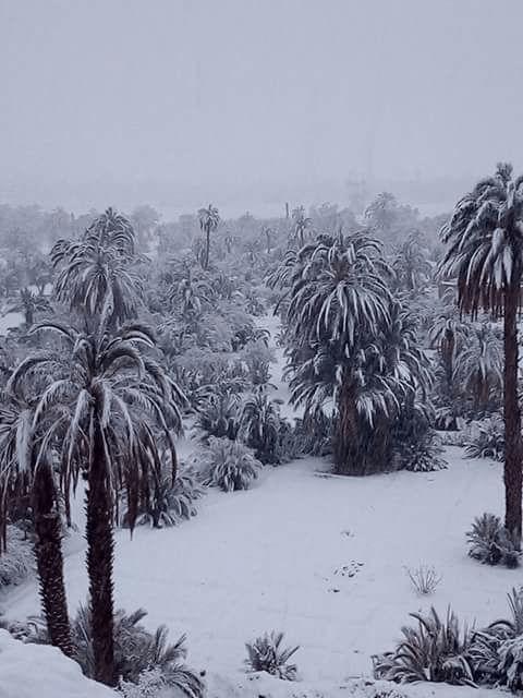 بالصور.. الثلوج في زاكورة لأول مرة