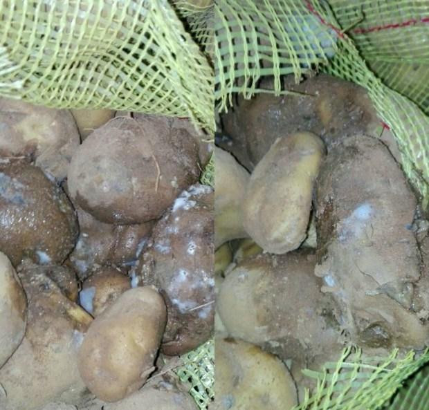 كانت غادي تباع فريت في مطاعم مراكش.. حجز وإتلاف 8 أطنان من البطاطس الفاسدة