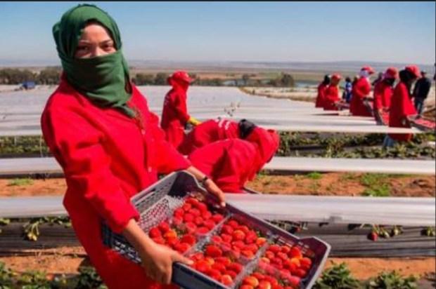 وزارة الشغل: لم يحدث أي تحرش جنسي ضد العاملات المغربيات في حقول إسبانيا