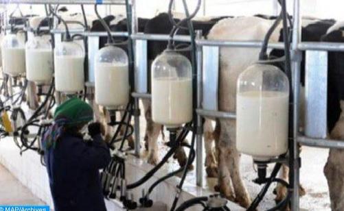 """وزارة الفلاحة: استعمال """"الغبرة"""" في صناعة الحليب ممنوع منذ سنة 2000"""