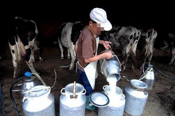"""مكتب السلامة الصحية: الحليب يخضع لمراقبة صارمة و""""ديال العبار"""" فيه مخاطر"""