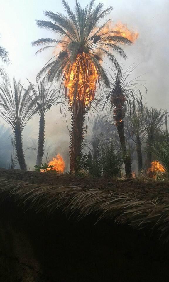 الطبيعة ولا البشر.. من يحرق طاطا؟