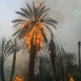 النيران تشتعل من جديد في واحة تمنارت.. طاطا تستغيث (صور)