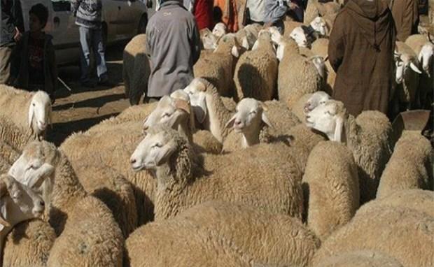 مستشار برلماني: ما عطاوناش الحولي ديال العيد