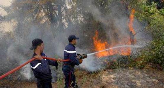في 8 أشهر.. 230 حريقا دمر 463 هكتارا من الغابات