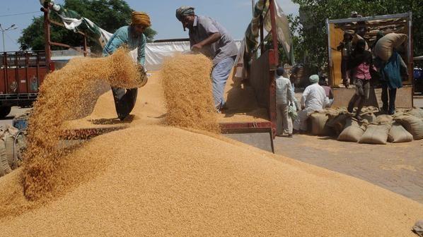 إضافة إلى روسيا وأوكرانيا.. المغرب سيستورد 3 ملايين طن من القمح الفرنسي