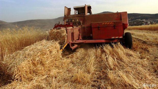 فلاحون طالبوا الوزارة بالتدخل.. حشرة سوداء غريبة تهدد المحاصيل الزراعية في تزنيت وكلميم