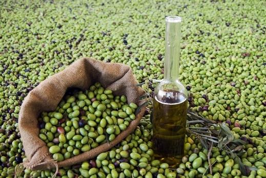 وفر 50 ملون يوم عمل.. إنتاج قياسي للزيتون في المغرب فاق مليوني طن