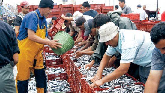 في 2018.. أزيد من 7 ملايير درهم مداخيل منتجات الصيد الساحلي والتقليدي