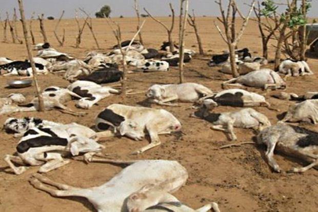 قلق في الحدود المغربية.. نفوق آلاف الخرفان في الجزائر بسبب داء غامض
