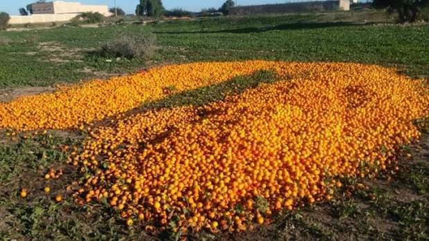 في جهة سوس.. إتلاف 20 ألف طن من البرتقال