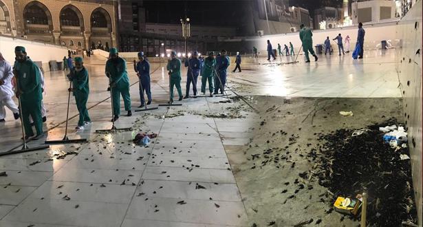 بالصور والفيديو.. أسراب حشرات تجتاح الحرم المكي