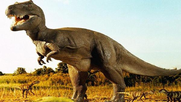 بعدما قضى فترة في مراكش.. الديناصور غادي يرجع لجهة درعة تافيلالت!!