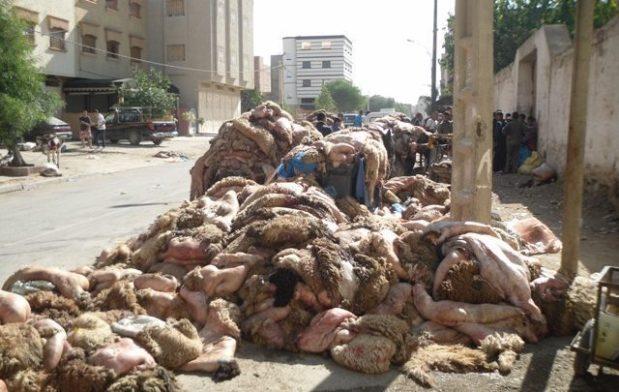 إطلاق حملة وطنية لفرزها.. المغرب يخسر سنويا 7 مليار سنتيم بسبب إهمال جلود الأضاحي