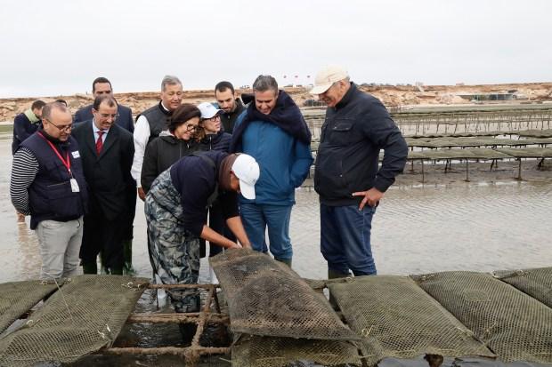 لفائدة حوالي 500 مقاول شاب.. إطلاق أزيد من 200 مشروع لتربية الأحياء البحرية في الداخلة
