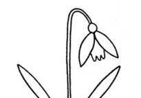 Malvorlage Schneeglöckchen