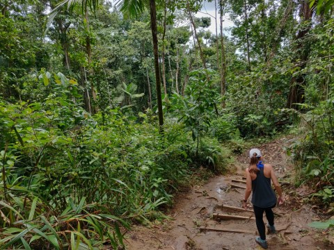 Hiking in the sofaia rainforest