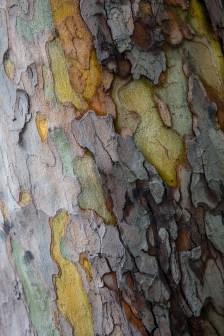 got_wood