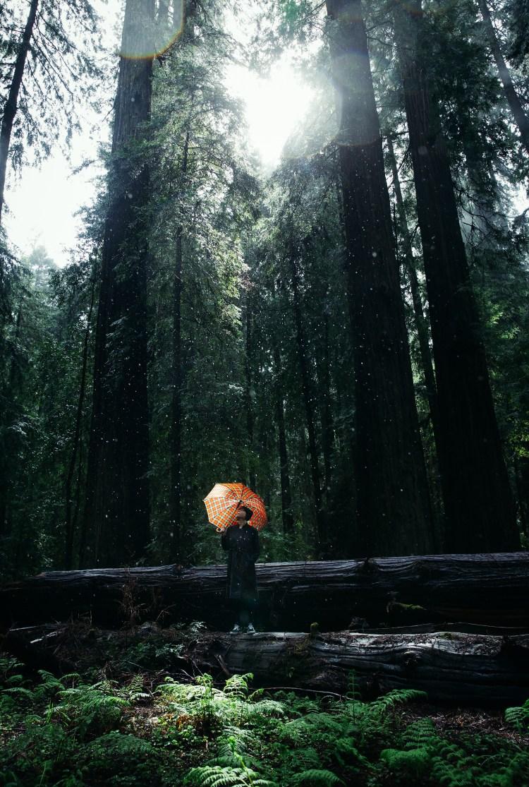 Cecilie @ Redwoods