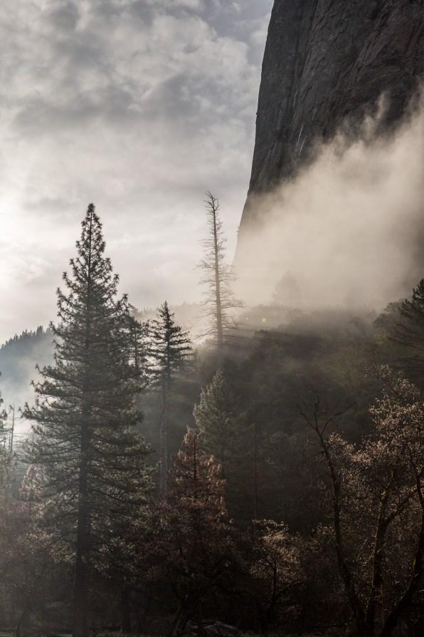 Yo Yosemite