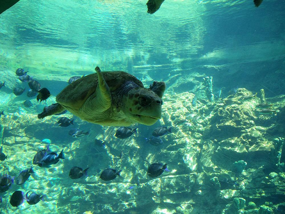 Turtletrek - SeaWorld Orlando
