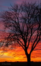 zonsondergang in winter
