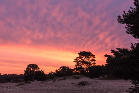 zonsopkomst bij Soester Duinen