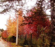 Estradas pontilhadas de árvores coloridas
