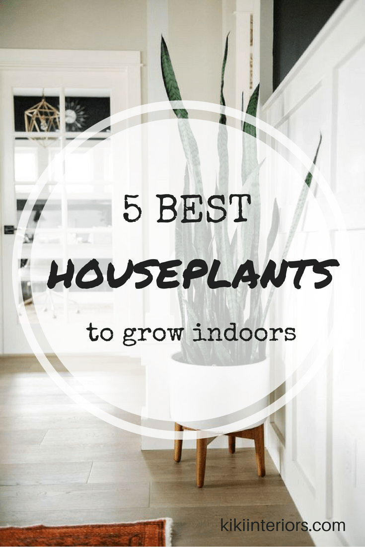 5-best-houseplants-grow-indoors
