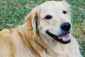 Barkley close up2