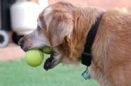 Sam & Tennis Balls!