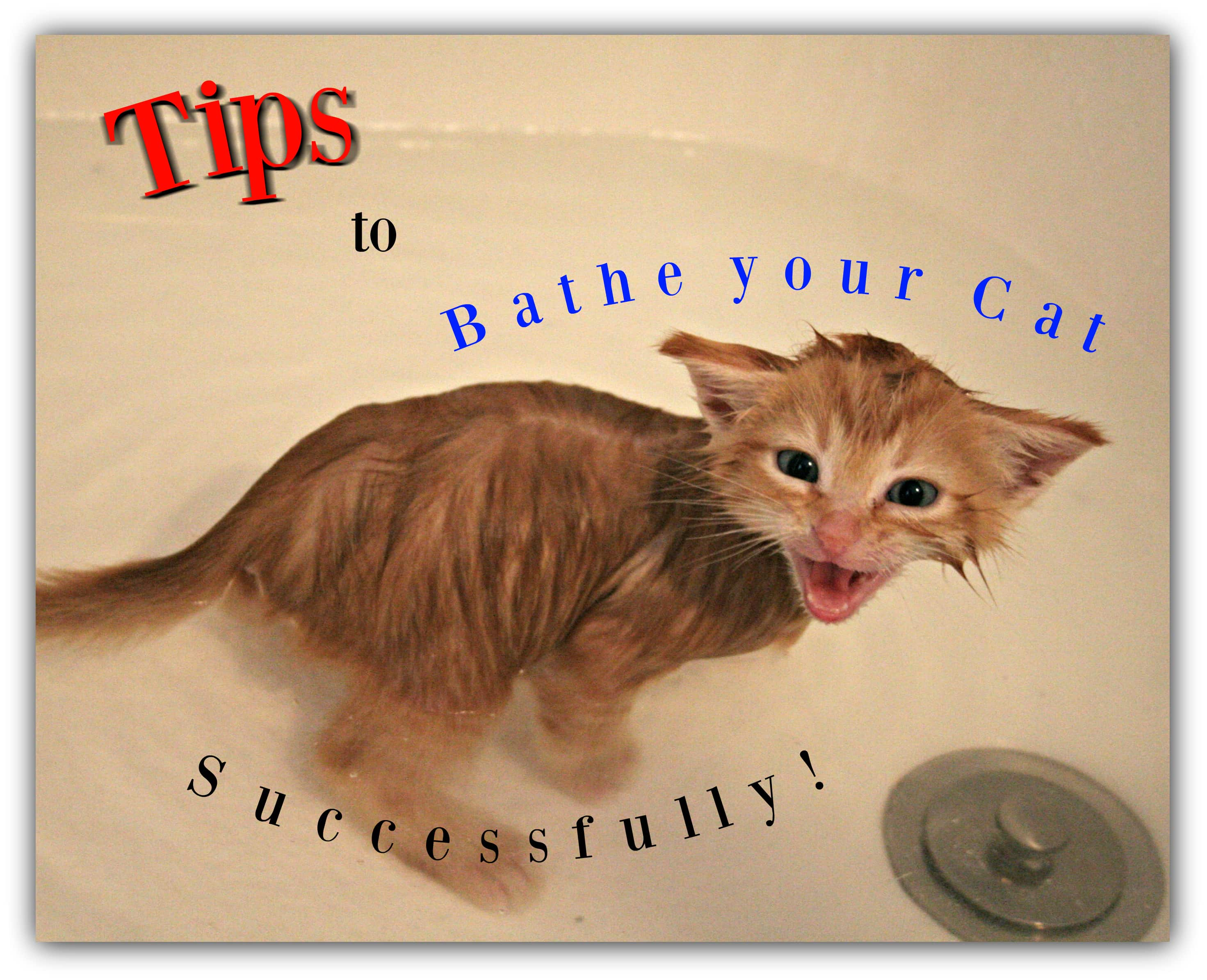 tips to bathe your