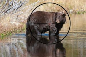 bear with reticle